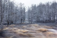 Wild Morrum river in snowy winter. Sweden Royalty Free Stock Images
