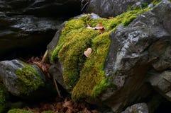 Wild mos Royalty-vrije Stock Afbeeldingen