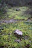 Wild mos op een weg royalty-vrije stock afbeeldingen
