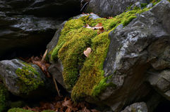 Wild moss royalty free stock images