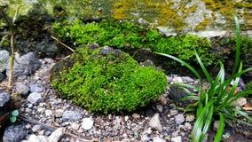 wild moss royaltyfria foton