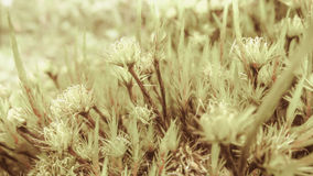 The Wild Moss Soothing My Eyes in Vintage Style Royalty Free Stock Photos