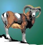 Wild mouflon animal Stock Photos