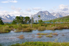 Wild mountain beauty Stock Photos