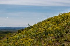 Yellow mountain flowers on the hill with panoramic view stock photography