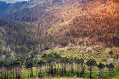 Wild mountain forest landscape. Corsica Stock Photo