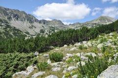 Wild mountain garden Stock Photo