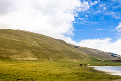 Wild mountain. Landscape with cows Royalty Free Stock Photo