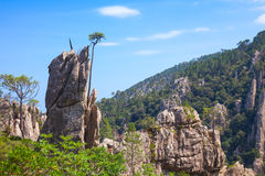 Wild mountain landscape, pine trees on rock Royalty Free Stock Photography