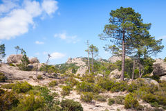 Wild mountain landscape with pine trees Stock Photo