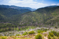 Wild mountain landscape. South of Corsica island Stock Images