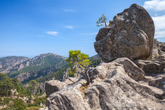 Wild mountain landscape, trees grow on rocks Stock Images