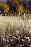Wild mountain plants Stock Image