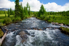 Wild mountain river Royalty Free Stock Images