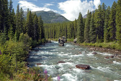 Wild mountain river Royalty Free Stock Image