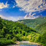 Wild mountain river on a clear summer day Stock Image
