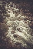 Wild mountain river flowing through the deep green forest. Royalty Free Stock Images