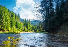 Wild mountain river in forest. Lovely autumn scenery of Carpathian nature Royalty Free Stock Image