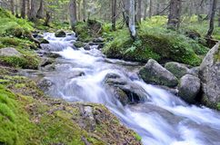 Wild mountain river. In low tatras in slovakia Stock Photography