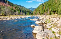 Wild mountain river with rocky shore. Lovely autumn scenery of Carpathian nature among the ancient forests of Synevyr National Park stock image