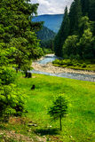 Wild mountain river in summer Royalty Free Stock Photography