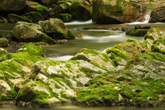 Wild Mountain Trout Stream. A wild mountain trout stream located in the Appalachian Mountains of Virginia, USA Royalty Free Stock Photo