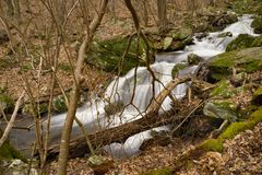 Wild Mountain Trout Stream. Located in the Blue Ridge Mountains of Virginia, USA Royalty Free Stock Photo