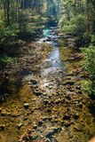 Wild Mountain Trout Stream. A wild mountain trout stream located in the Blue Ridge Mountains of Virginia, USA royalty free stock photo