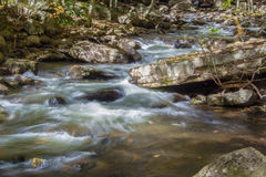 Wild Mountain Trout Stream Stock Photos