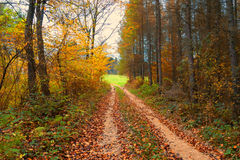Wild muddy outback road in the forest autumn landscape Royalty Free Stock Photos