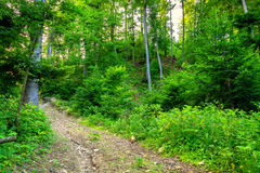 Wild Muddy Outback Road In The Forest Landscape Stock Photo