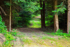 Wild Muddy Outback Road In The Forest Landscape Royalty Free Stock Images