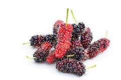 Wild mulberry Stock Photos