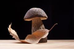 Wild Mushroom. Studio shoot of wild mushroom and chestnut leaf on the kitchen desk with black background Stock Image