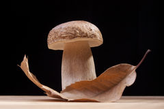 Wild Mushroom. Studio shoot of wild mushroom and chestnut leaf on the kitchen desk with black background Royalty Free Stock Photos