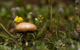 Wild Mushroom. Closeup of a wild mushroom with yellow flowers Stock Image