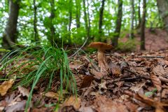 Wild mushroom deep inside the forest stock photo