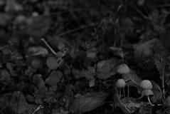 Wild mushroom family Royalty Free Stock Images