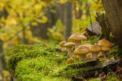 Wild mushroom Stock Image