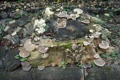 Wild mushroom grown on stump Stock Photo