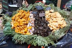 Wild mushroom mix Royalty Free Stock Photos
