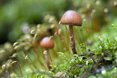 Wild mushroom with moss Royalty Free Stock Photo
