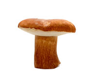 Wild Mushroom Over White Stock Photography