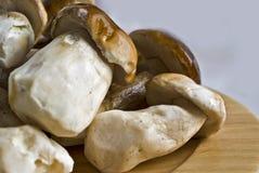 Wild mushrooms. Freshly picked wild mushrooms on plate royalty free stock photos