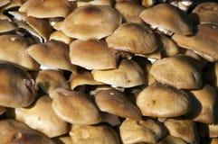 Wild Mushrooms Royalty Free Stock Photos