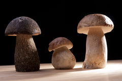Wild Mushrooms. Studio shoot of three wild mushrooms on the kitchen desk with black background Stock Images
