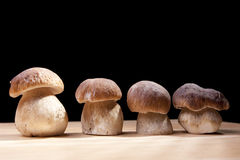 Wild Mushrooms. Studio shoot of four wild mushrooms on the kitchen desk with black background Royalty Free Stock Photography