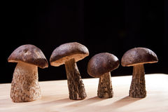Wild Mushrooms. Studio shoot of wild mushrooms on the kitchen desk with black background Royalty Free Stock Photos
