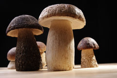 Wild Mushrooms. Studio shoot of wild mushrooms on the kitchen desk with black background Stock Images