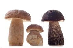 Wild Mushrooms. Studio shoot of wild mushrooms on the kitchen desk with white background Royalty Free Stock Photos